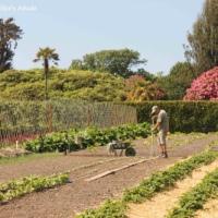 FFfAW: Grandma's Garden